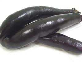 茄子の品種